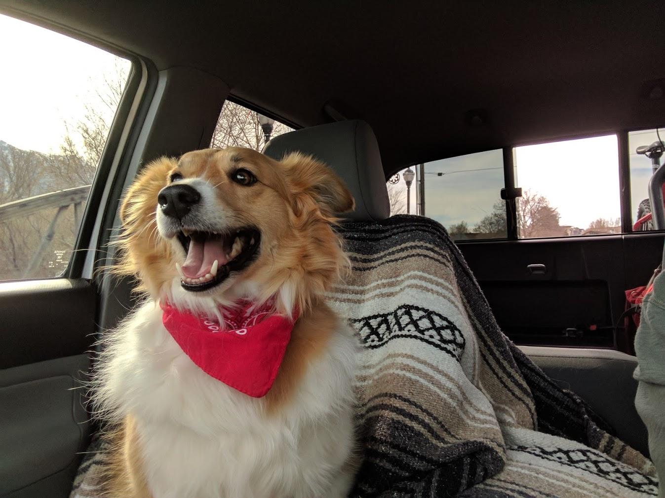 cute dog wearing a red bandana