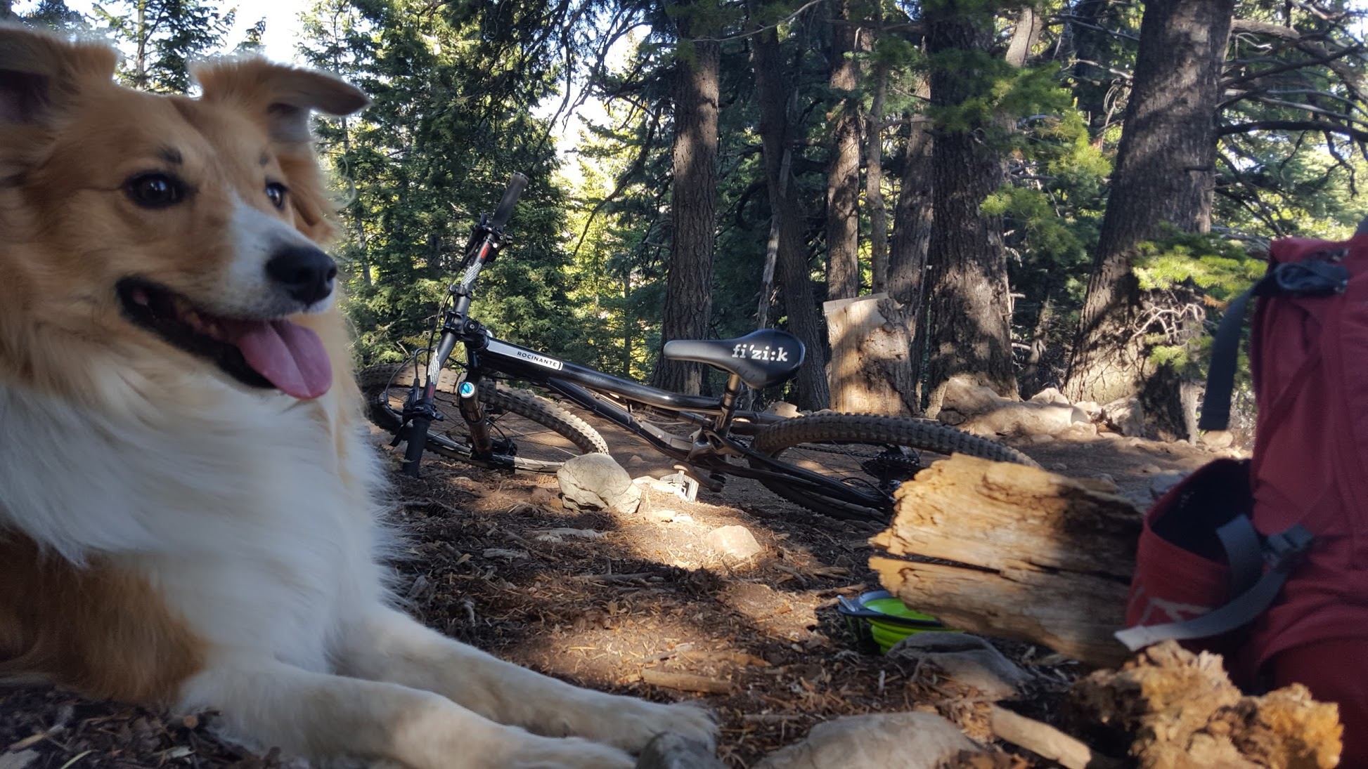 Mountain Bike Dog resting by the side of the trail