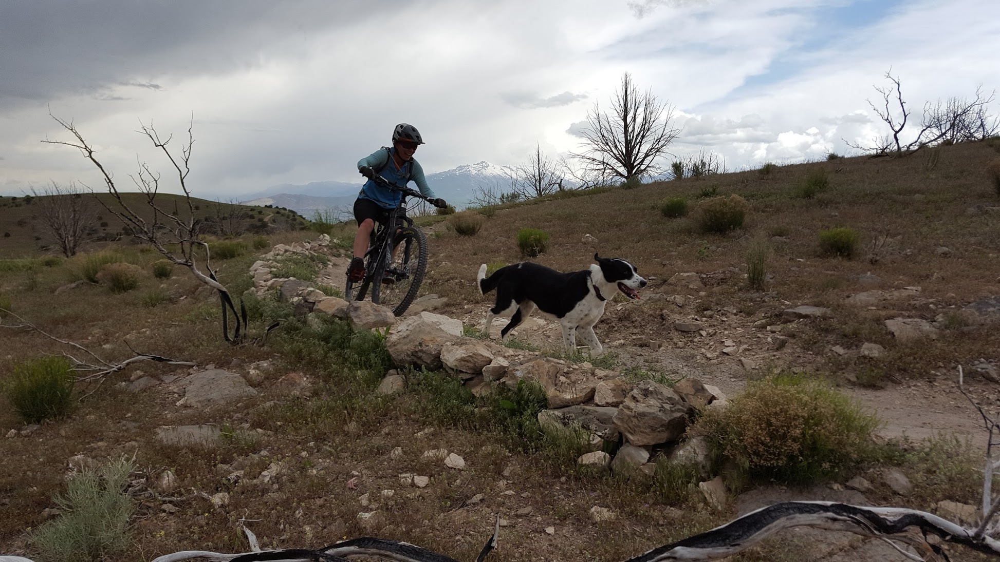 happy mountain bike dog running a trail
