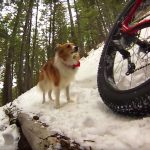 Fatbiking Road to WOS