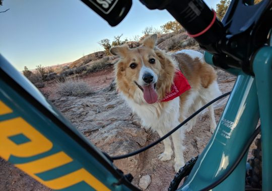Moab Mountain Bike Dog