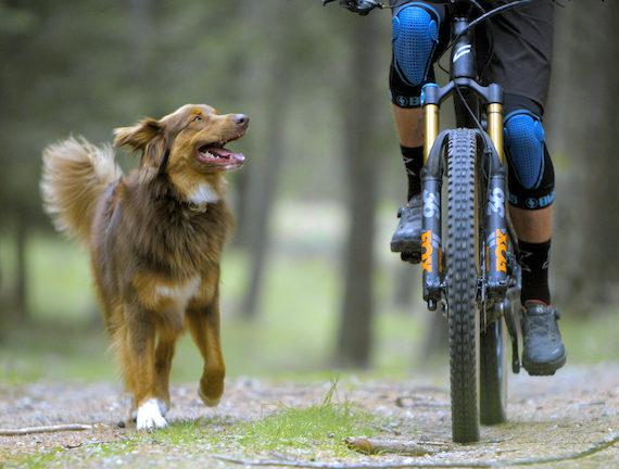 "Video: Balu in ""Paws & Wheels"""