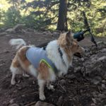 SGODA Dog Cooling Vest | Review