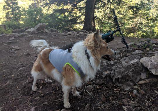 SGODA Dog Cooling Vest | Review