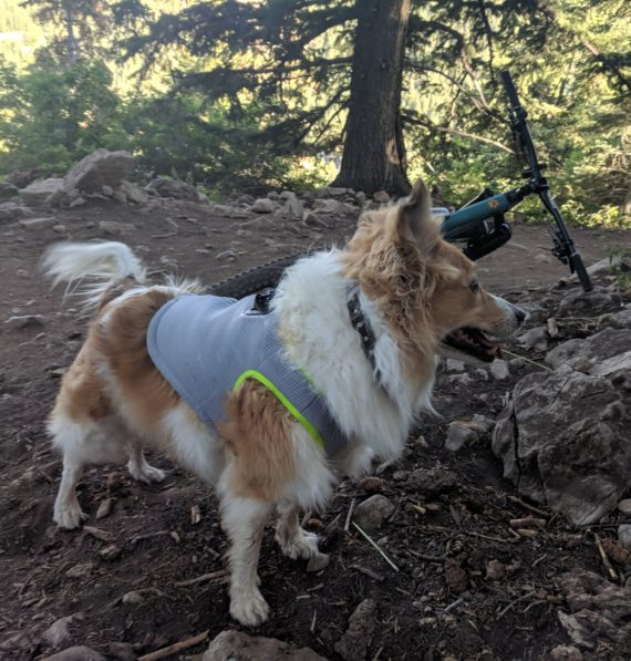 SGODA Dog Cooling Vest   Review